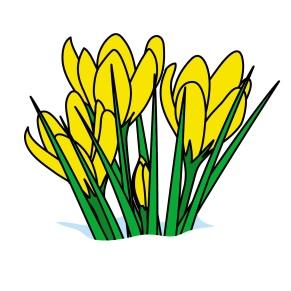 SpringCrocus