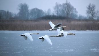 winter-2011157_640