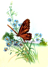 drawings-of-butterflies-5
